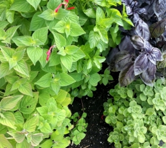Distillery Gardening – July 2014