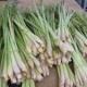Lemongrass Gimlet